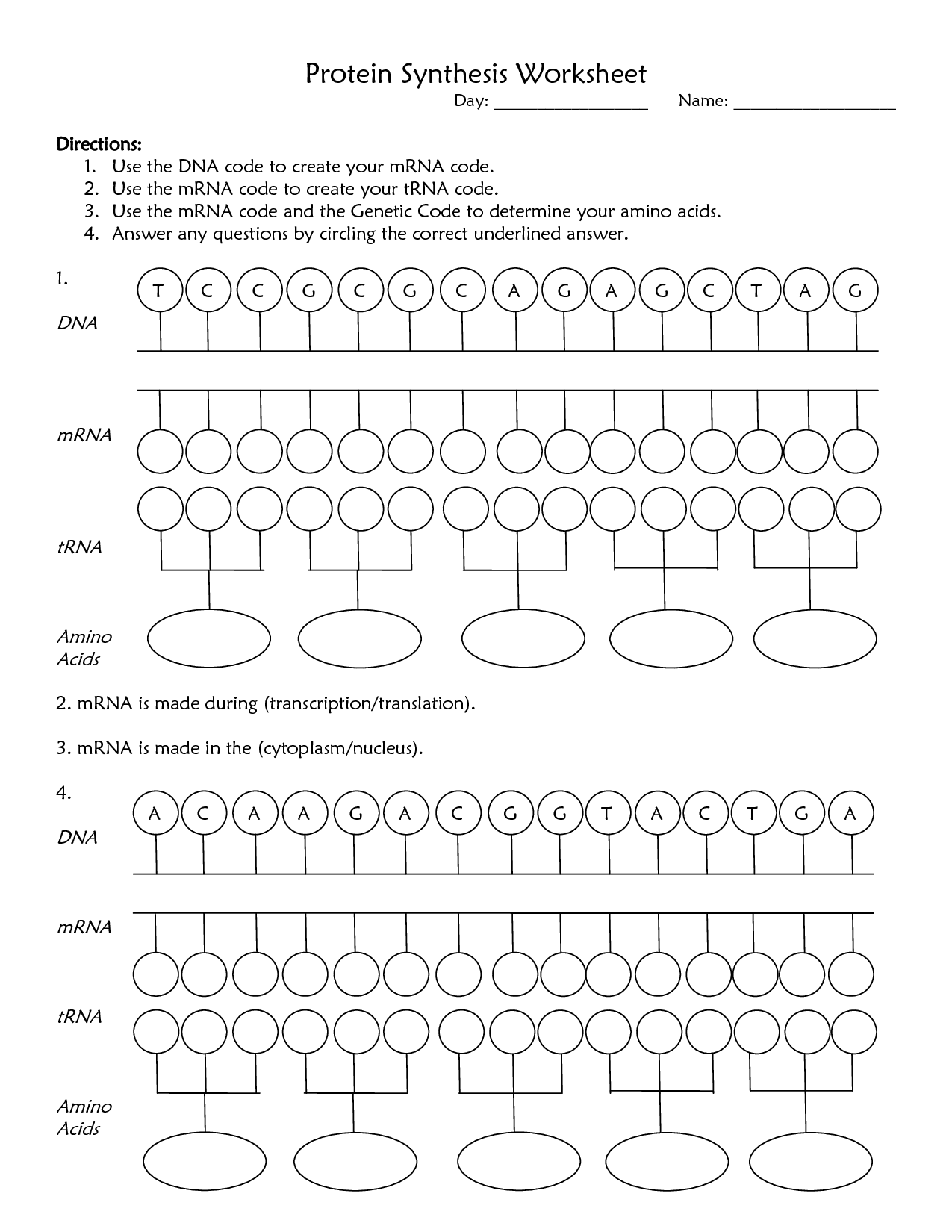 2015 2016 Ms McRaes Science – Dna Worksheet